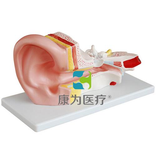 """""""康为医疗""""中耳解剖放大模型"""
