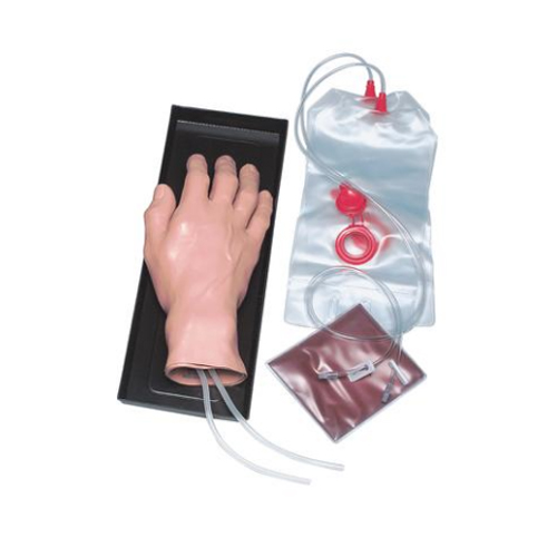 德国3B Scientific®静脉注射手模型