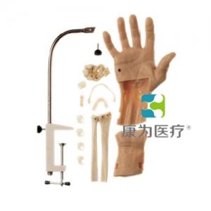 """""""康为医疗""""腕关节镜检查模型,腕关节镜检查操作模型"""