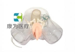 """""""康为医疗""""男性泌尿电切模型"""