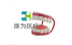 """""""康为医疗""""儿童牙护理保健模型"""