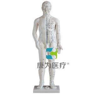"""""""康为医疗""""人体针灸模型46CM"""