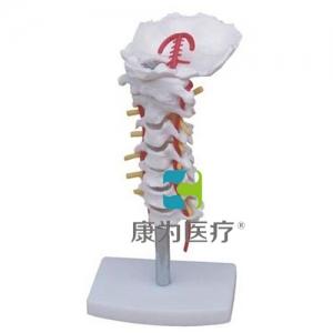 """""""康为医疗""""颈椎带颈动脉模型"""