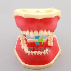 """""""康为医疗""""牙周病实习模型"""