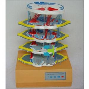 """""""康为医疗""""脊髓内部结构和上下纤维电动模型"""